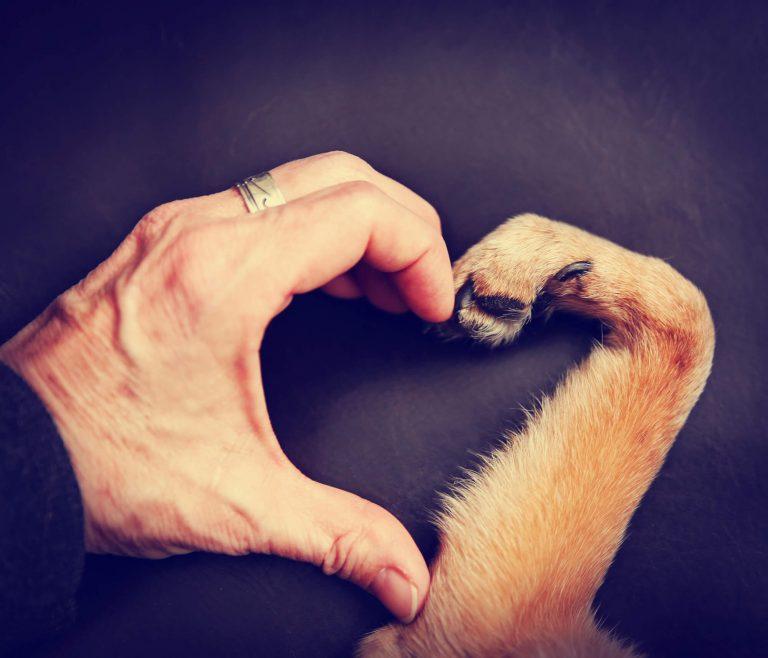 לגדל כלב